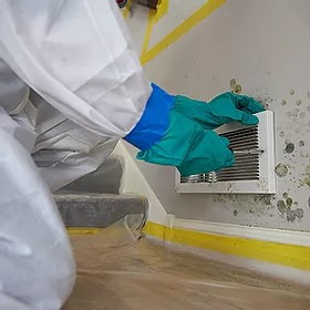 cleaning of mold